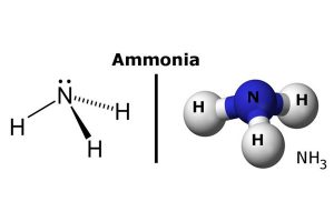 [Image: amoniac-300x200.jpg]